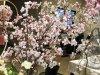 サクラサク!東京堂の春夏展示会は今年も桜の提案がすごかった!